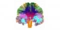 Club de Neurologie de l'Environnement (CNE)